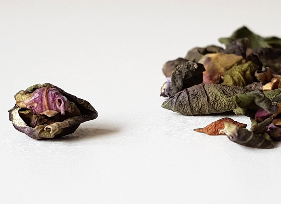 Paars met groen gedroogd spruitje. Conceptuele / beeldende kunst door Jeanne de Bie in Eindhoven. Mixed media portfolio en artist statement.